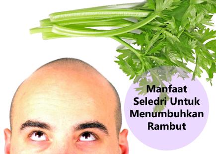manfaat seledri untuk menumbuhkan rambut, menumbuhkan rambu botak dengan daun seledri